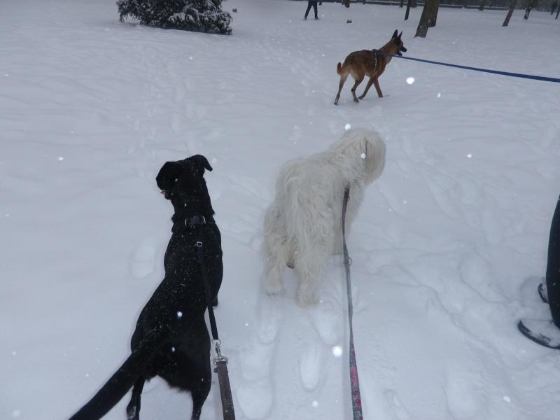 hum la neige Imgp3639