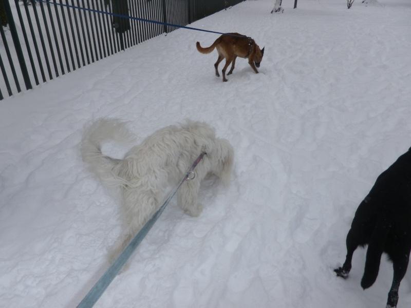 hum la neige Imgp3640