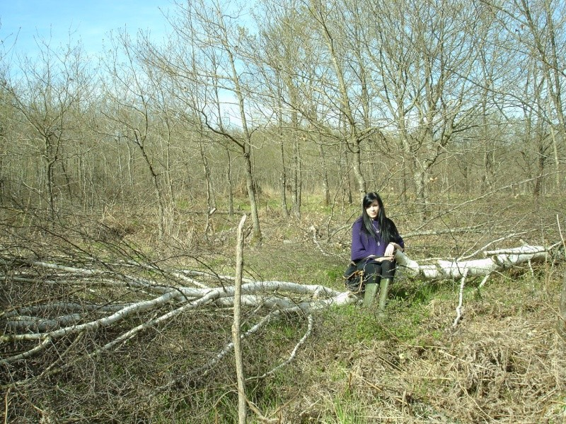 La forêt de Tronçais - Allier (03) Assise10