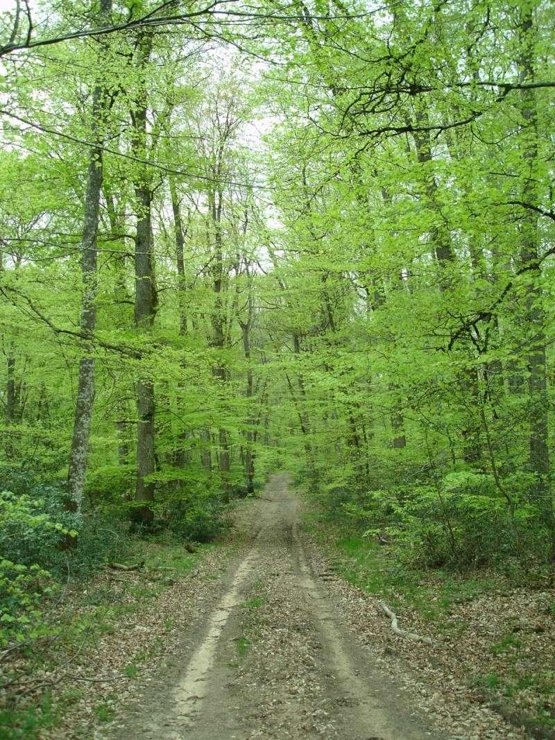La forêt de Tronçais - Allier (03) L_alla10
