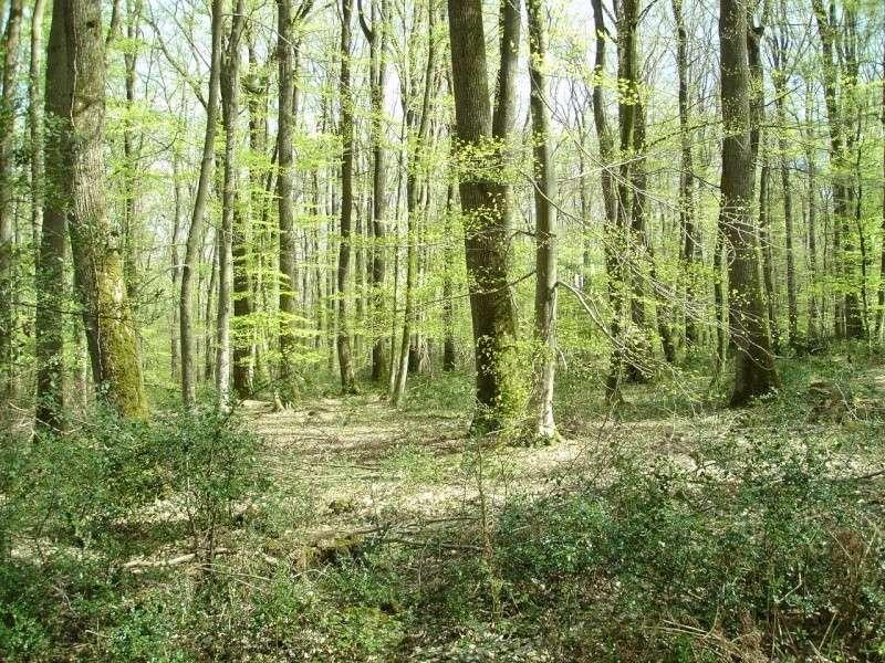 La forêt de Tronçais - Allier (03) Ombre_10