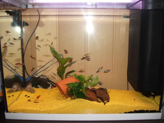 Aquariums à thèmes ~ Postez vos photos ~ - Page 5 Dscf1015