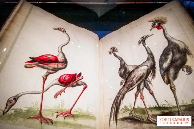 Exposition Les animaux du roi à Versailles - Page 2 68958110