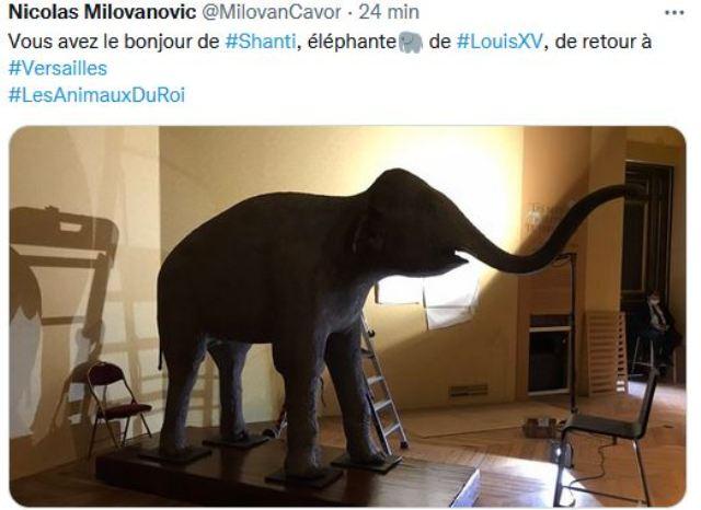 animaux - Exposition Les animaux du roi à Versailles 87921