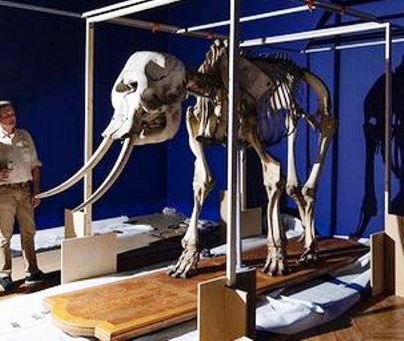 animaux - Exposition Les animaux du roi à Versailles 951