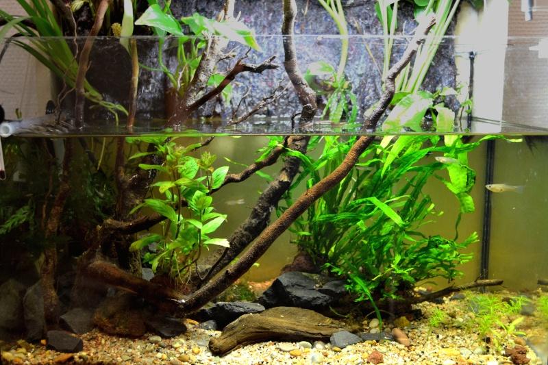Petit Mur Végétal sur un Aquarium de 40L Dsc_0110
