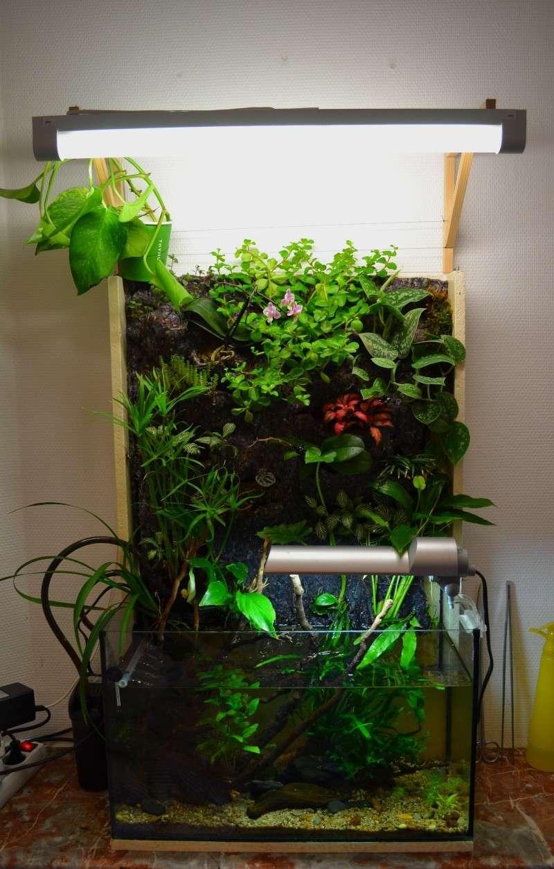 Petit Mur Végétal sur un Aquarium de 40L Dsc_0210