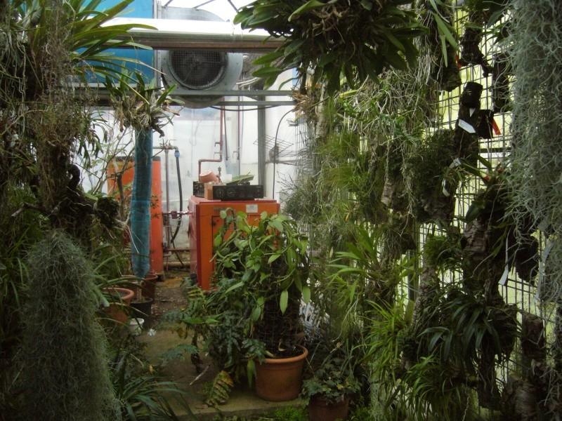 Luzerner Garten (Orchidées-Tillandsias-Aquatiques-Caudex-Cactées) P1110533