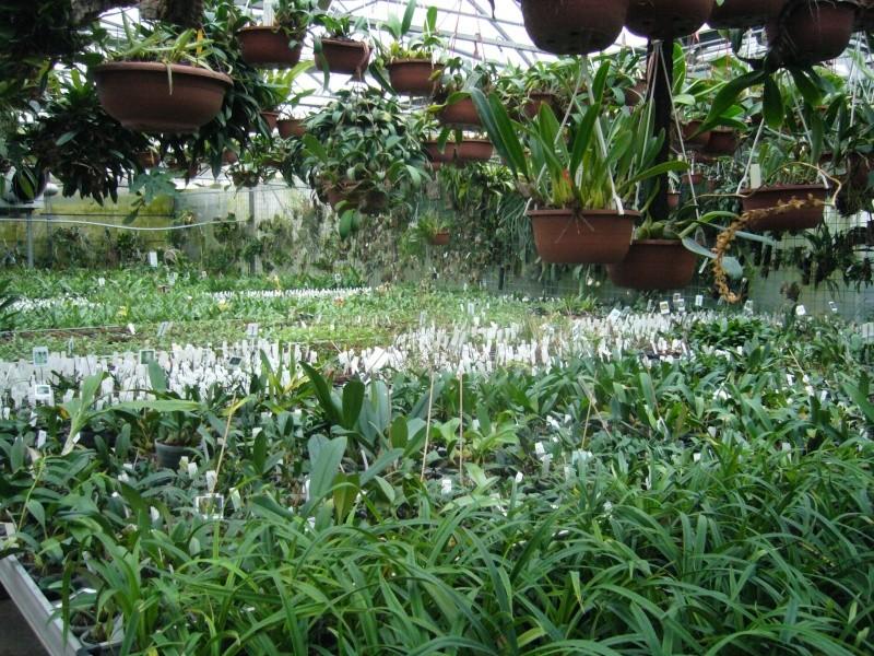 Luzerner Garten (Orchidées-Tillandsias-Aquatiques-Caudex-Cactées) P1110614