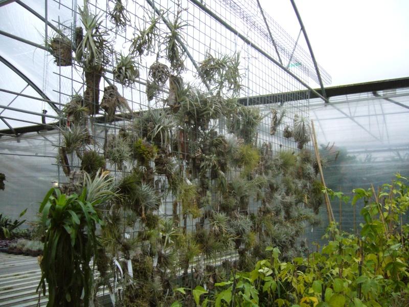 Luzerner Garten (Orchidées-Tillandsias-Aquatiques-Caudex-Cactées) P1110616