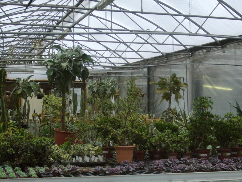 Luzerner Garten (Orchidées-Tillandsias-Aquatiques-Caudex-Cactées) P1110618