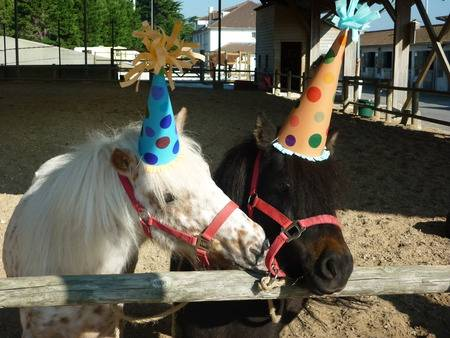 Joyeux anniversaire Euqidas ! 111