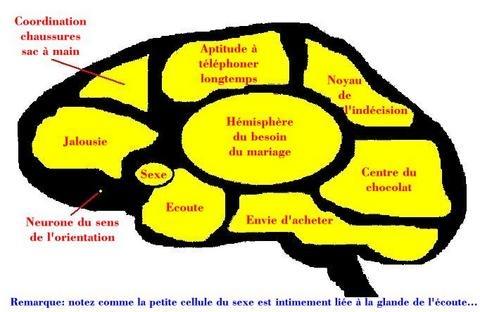 la photo du cerveau d'un mec Sans_t10