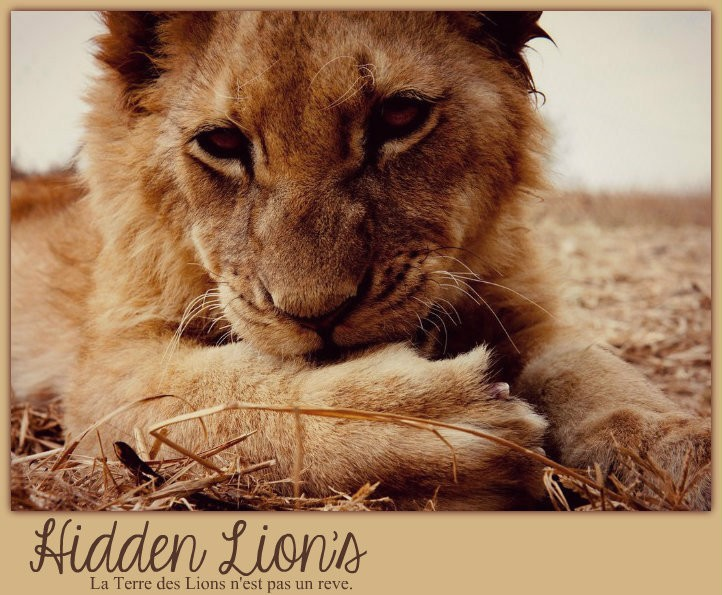 Hidden Lion's
