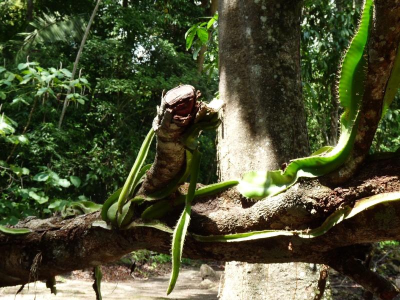 Qu'est-ce une plante epiphyte? P1000710