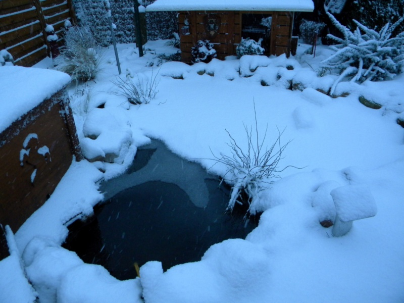 mon bassin sous la neige Dscn0730
