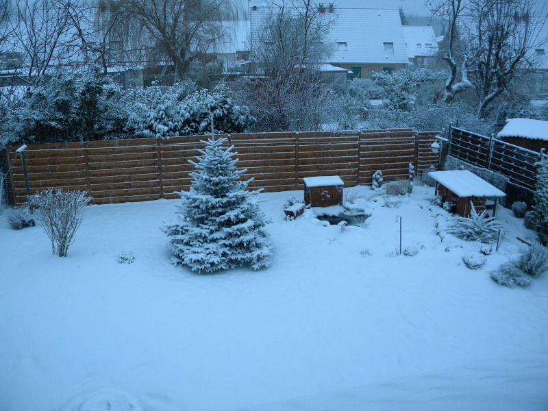 mon bassin sous la neige Dscn0731
