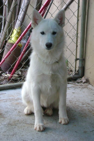 Wolf-Dogs and their Pups Update *12/12* 01410