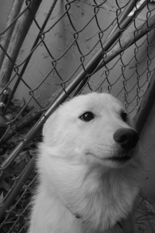 Wolf-Dogs and their Pups Update *12/12* 02410