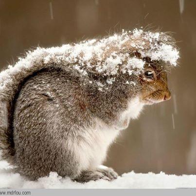 un peu de neige 37086_10