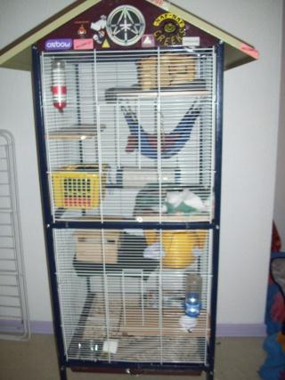 mes cages... et la pièce de vie  - Page 3 05111