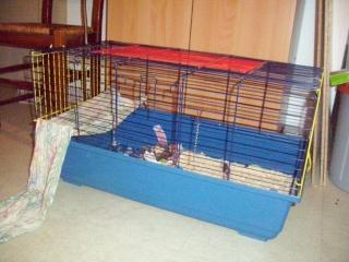 mes cages... et la pièce de vie  - Page 3 Cages_11
