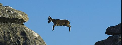 Lanzamiento de Cabra Hispana