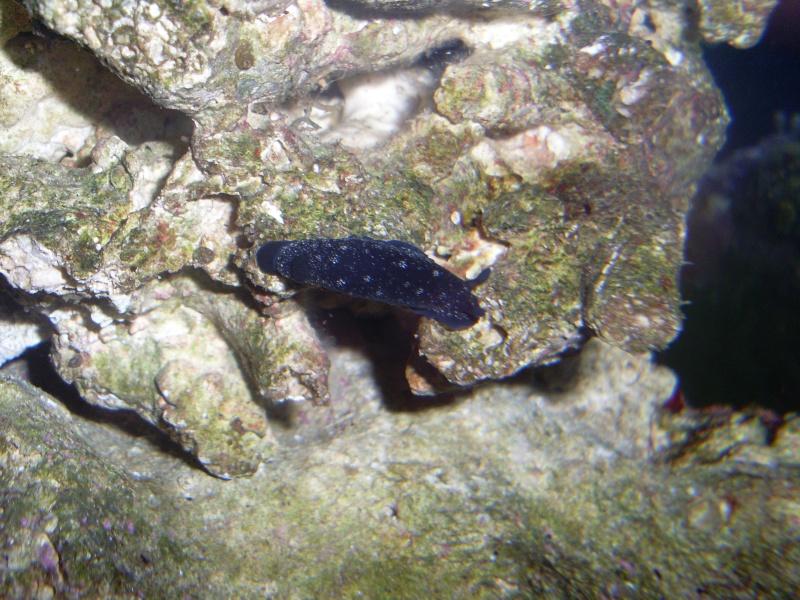 identification d'une limace Sl371210