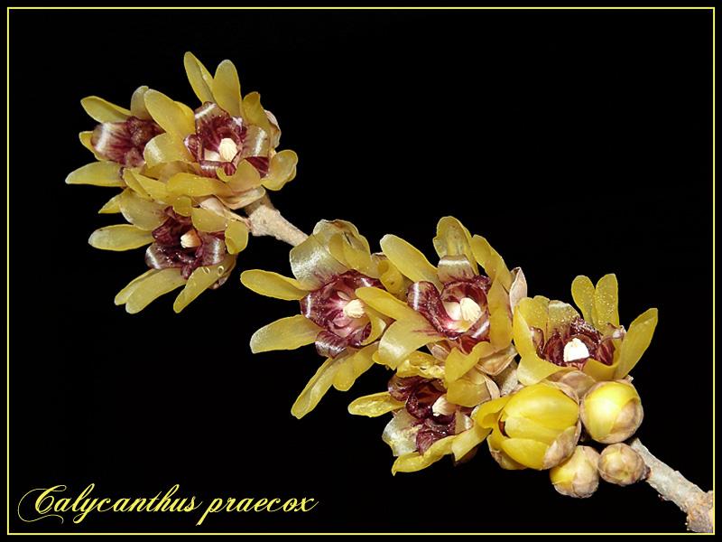 Fleur d'hiver P1040010