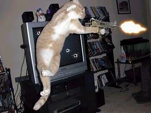 CAT-tastrophes! 12209910