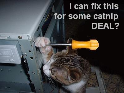 CAT-tastrophes! Catnip10