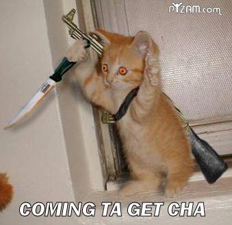 CAT-tastrophes! Notcut10