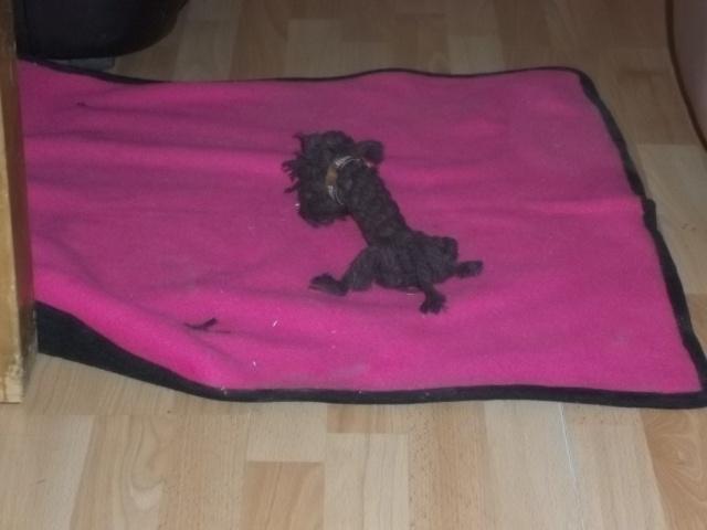 My dog has his own  little doggie!... :) Piesek11