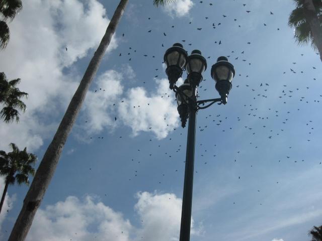 [Walt Disney World Resort] Séjour au Grand Floridian (été 2009) Img_4719