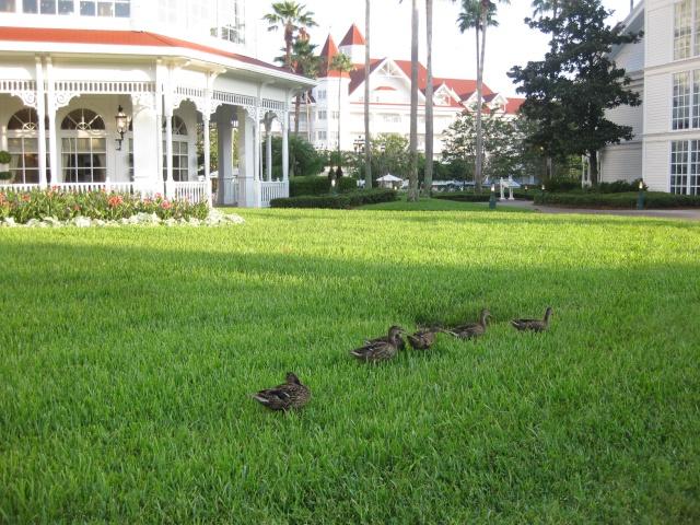 [Walt Disney World Resort] Séjour au Grand Floridian (été 2009) Img_5413