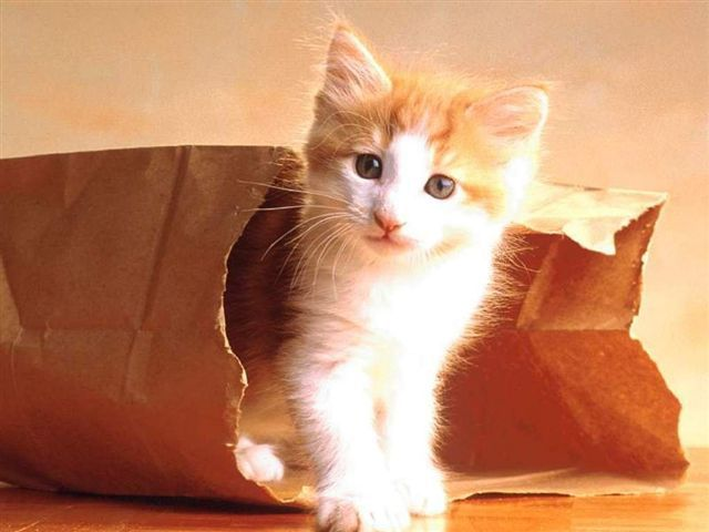 Nos amis les chats Chats_10