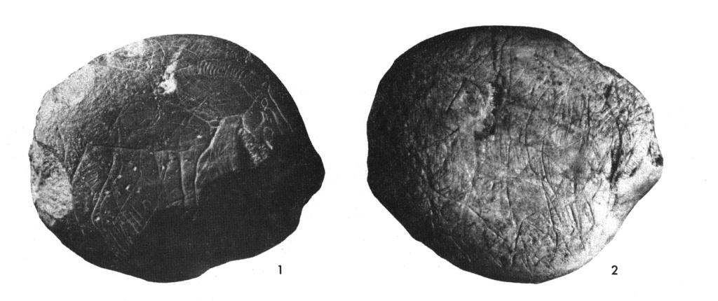 Galets et os gravés magdaléniens de la grotte de la Colombière (Neuville sur Ain / Poncin) 2_a_b10