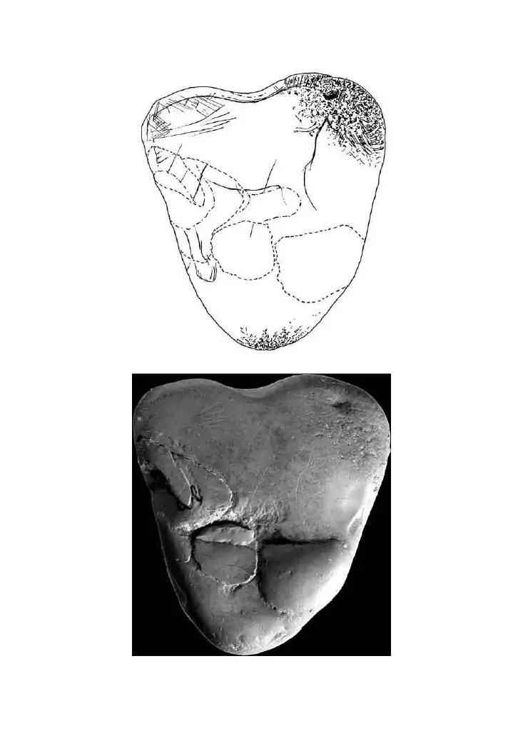Galets et os gravés magdaléniens de la grotte de la Colombière (Neuville sur Ain / Poncin) 31-64610