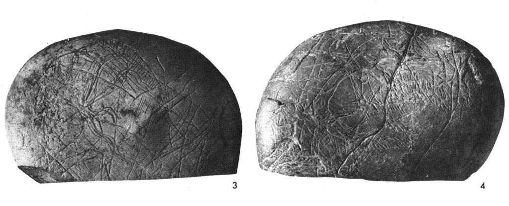 Galets et os gravés magdaléniens de la grotte de la Colombière (Neuville sur Ain / Poncin) 3_a_b10