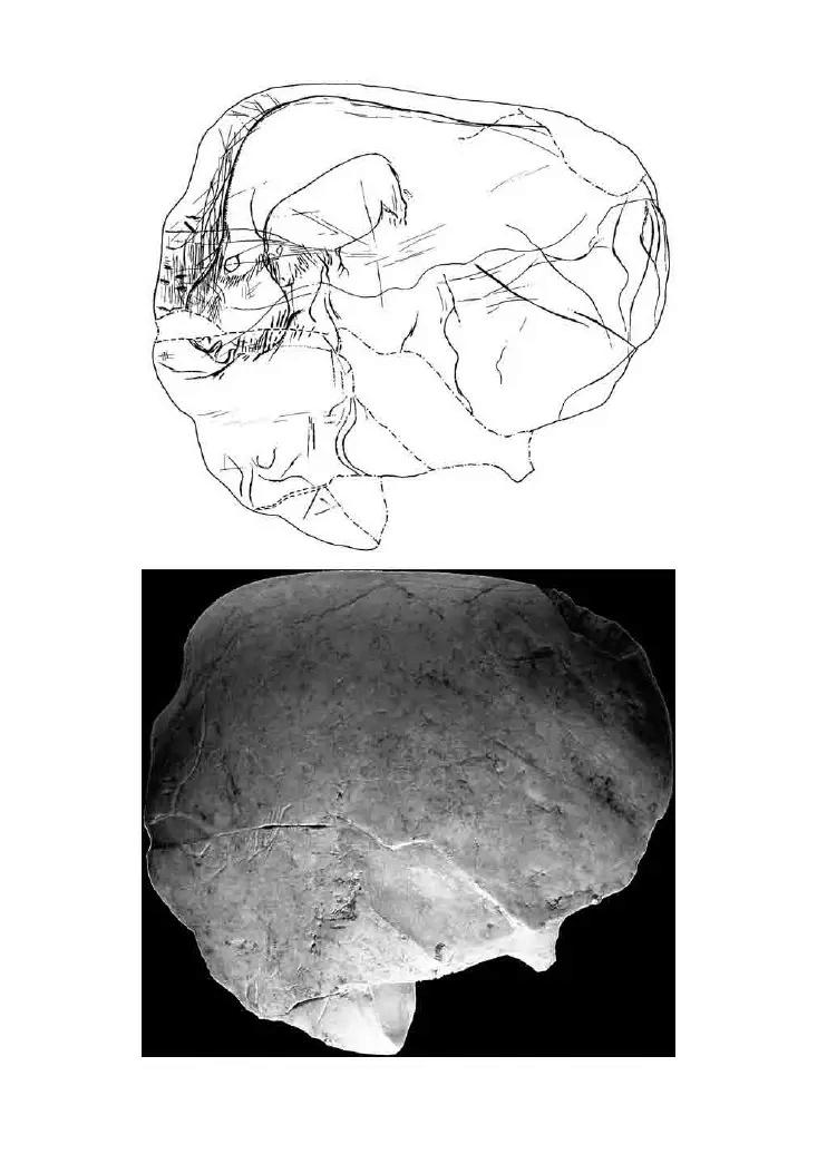 Galets et os gravés magdaléniens de la grotte de la Colombière (Neuville sur Ain / Poncin) 40-d6d10
