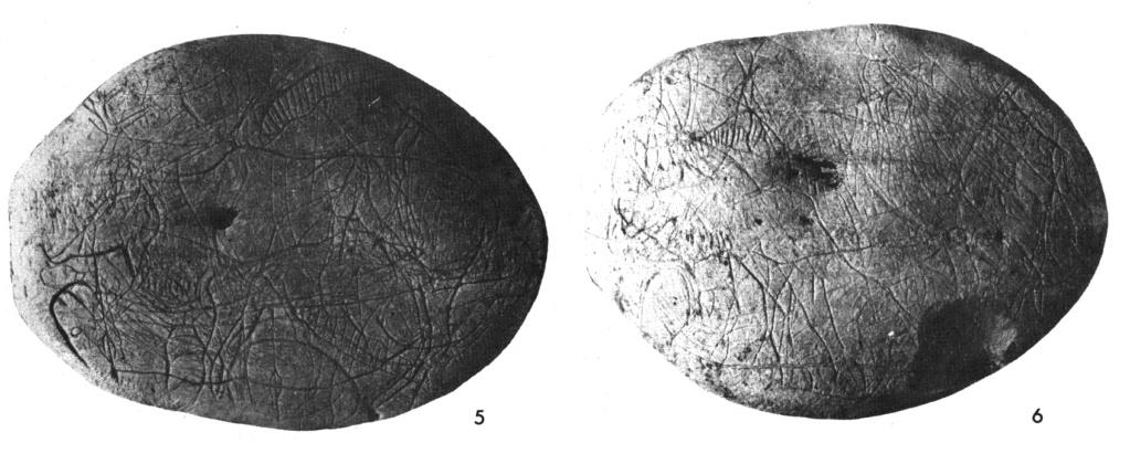 Galets et os gravés magdaléniens de la grotte de la Colombière (Neuville sur Ain / Poncin) 4_a_b10
