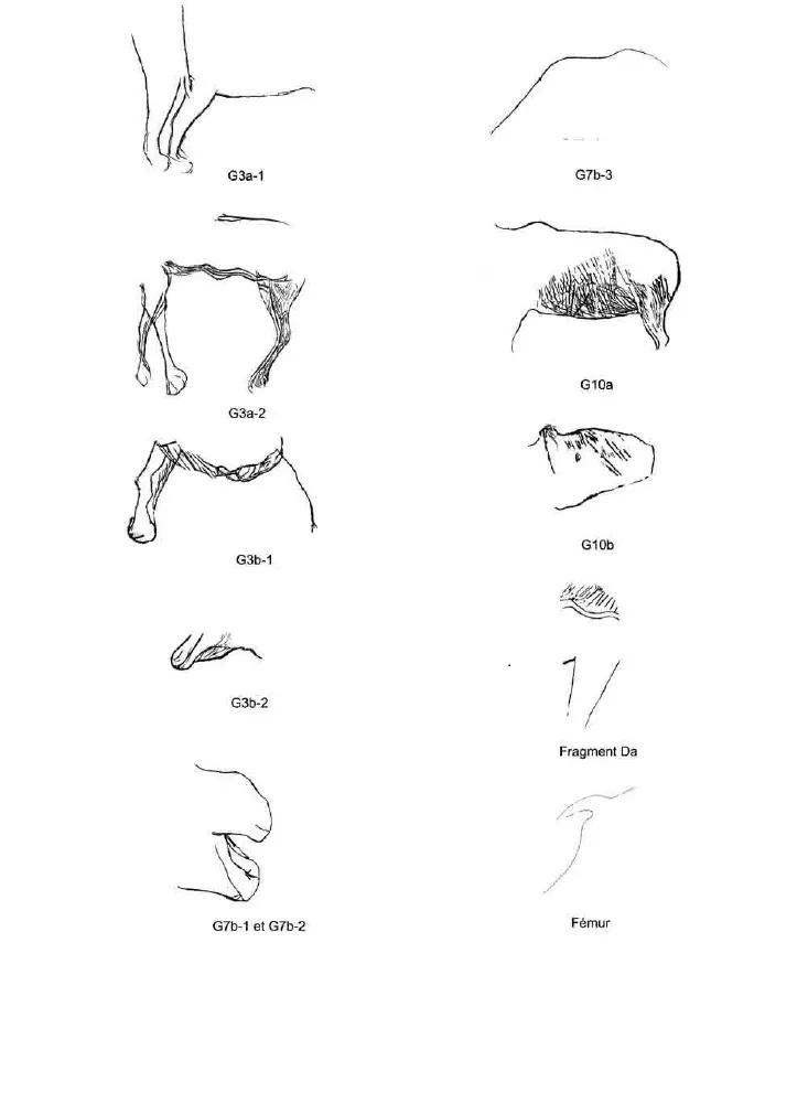 Galets et os gravés magdaléniens de la grotte de la Colombière (Neuville sur Ain / Poncin) 59-90810