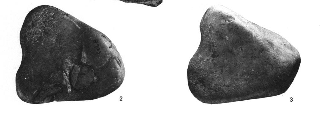 Galets et os gravés magdaléniens de la grotte de la Colombière (Neuville sur Ain / Poncin) 5_a_b10