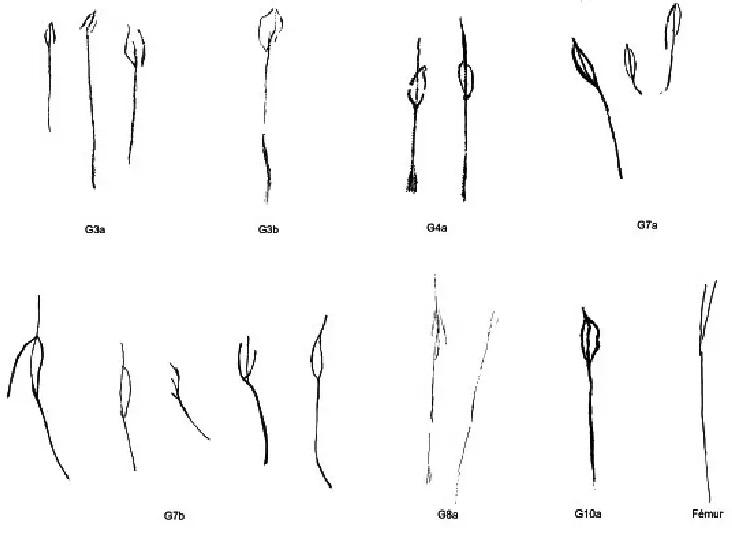 Galets et os gravés magdaléniens de la grotte de la Colombière (Neuville sur Ain / Poncin) 66-b7d10