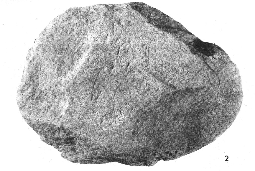 Galets et os gravés magdaléniens de la grotte de la Colombière (Neuville sur Ain / Poncin) 910