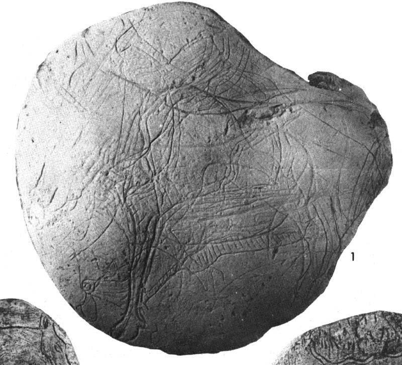 Galets et os gravés magdaléniens de la grotte de la Colombière (Neuville sur Ain / Poncin) Galet_10