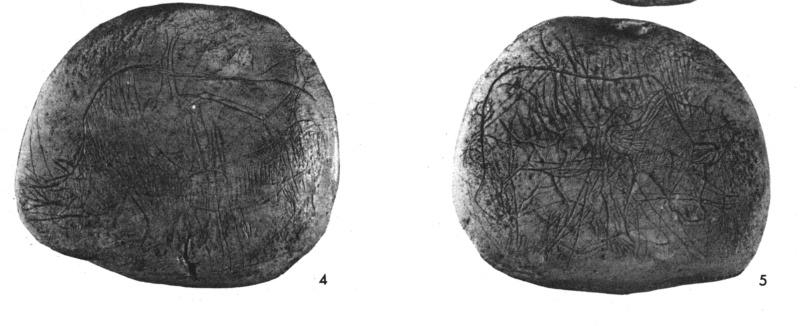 Galets et os gravés magdaléniens de la grotte de la Colombière (Neuville sur Ain / Poncin) Galet_11