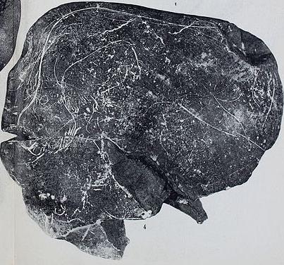 Galets et os gravés magdaléniens de la grotte de la Colombière (Neuville sur Ain / Poncin) Galet_25