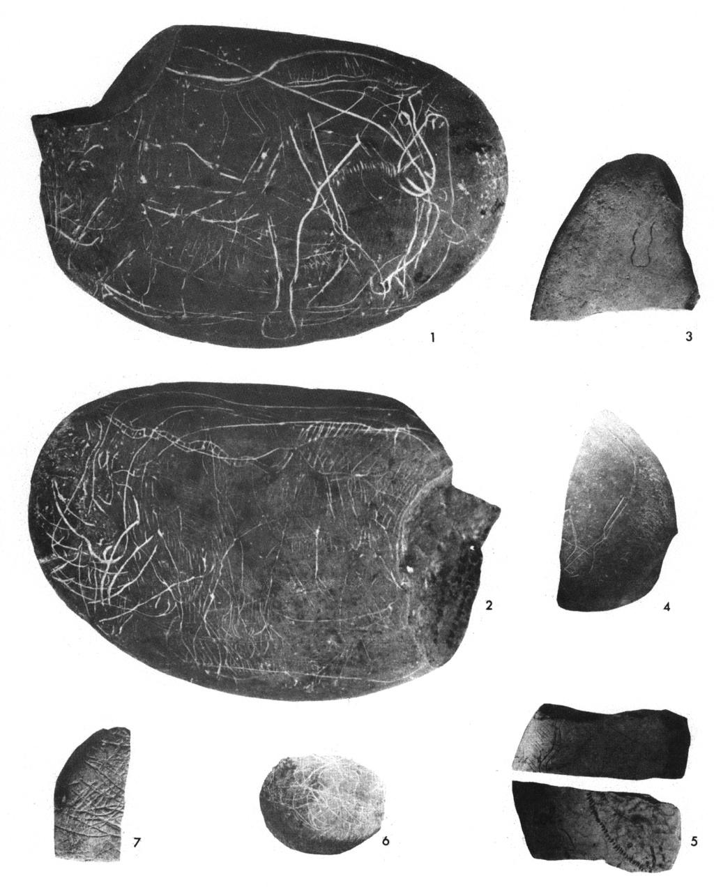 Galets et os gravés magdaléniens de la grotte de la Colombière (Neuville sur Ain / Poncin) Mhnly_11