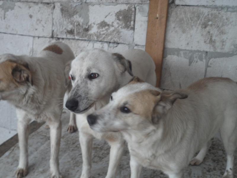 fata - FATA, née le 12/06/2009, arrivée chiot au refuge (soeur de Mickey et fille de Tara) - en FA dans le 49 - GARANT - SOS -R-FB-SC-30MA 15510